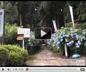 Un ramo de Hortensias… | Reflejos | Scoop.it