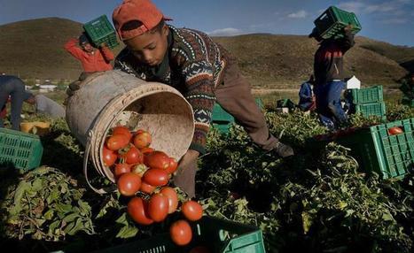 Le catene del cibo. 3,5 milioni di schiavi per servirci il pasto. | Il mondo che vorrei | Scoop.it