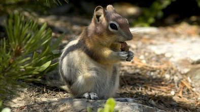 Slow-motion world for small animals | Lauri's Environment Scope | Scoop.it
