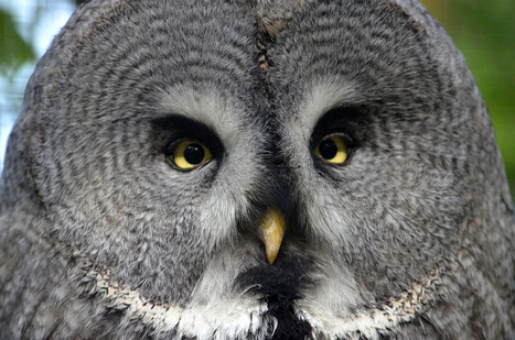 Owls' Acoustic Stealth Influence Aircraft Design | Rhino poaching | Scoop.it
