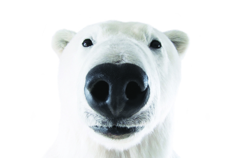 The Fuzzy Face of Climate Change - | All about water, the oceans, environmental issues | Scoop.it