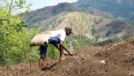 L'agriculture, une pièce motrice pour la reconstruction et le ... | Diprofav cooperative agricole | Scoop.it
