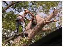 Three Tips To Finding A Reputable Tree Service | - – Marietta Tree ... | Tree Service Marietta | Scoop.it