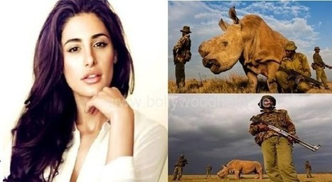 Nargis Fakhri joins the fight save the last White Rhino! | What's Happening to Africa's Rhino? | Scoop.it