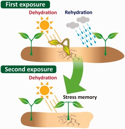 Epigenetic Memory for Stress Response and Adaptation in Plants | Plant-Microbe | Scoop.it