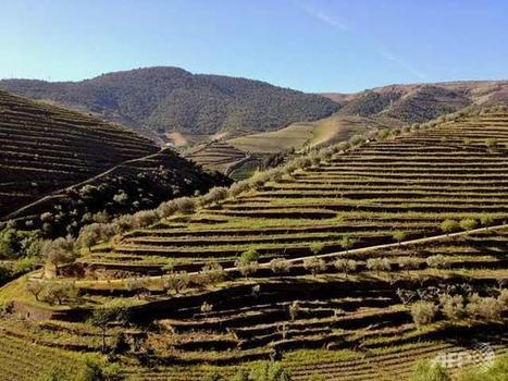 Upscale wine lovers throw lifeline to Portugal valley - Channel News Asia | Wine Pulse | Scoop.it