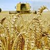 la perte des surfaces agricoles mondiales