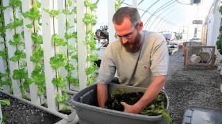 Redworms & Vertical Farming - Bright agrotech | Vertical Aquaponics | Vertical Farm - Food Factory | Scoop.it