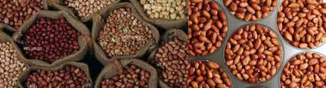 Indian Groundnuts,Indian Peanuts,Peanuts India,Peanut Exporters | Agrocrops | Scoop.it