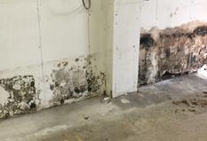 mold inspection services nj | Waterproofing | Scoop.it