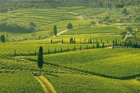 Brunello, crescono export e fatturato   Italica   Scoop.it