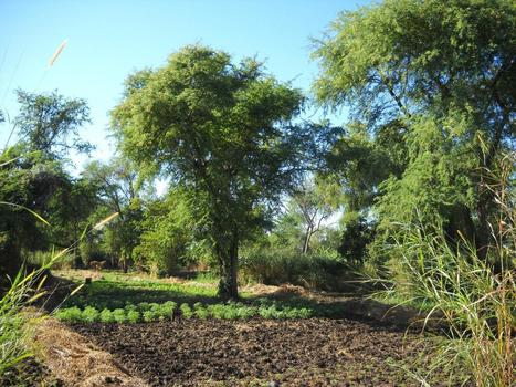 Trees on farms: The missing link in carbon accounting   EurekAlert   CGIAR Climate in the News   Scoop.it
