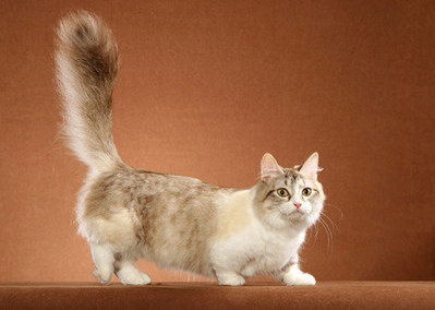 9 Cat Breeds with Funny Names | Cats Rule the World | Scoop.it
