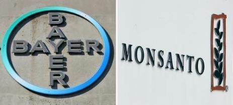 """Bayer/Monsanto: de grands chefs dénoncent """"un danger pour nos assiettes"""" - le Parisien   Actualités écologie   Scoop.it"""