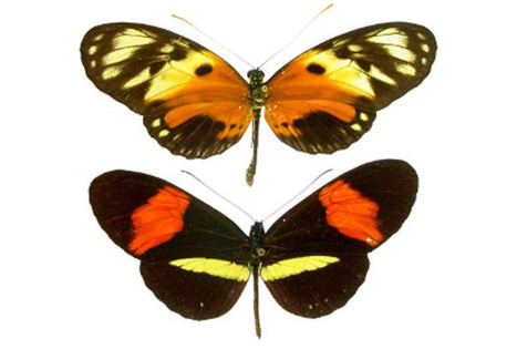 Females Choose Biological Fitness Over Other Traits In Mating Game | Amazing Science | Scoop.it
