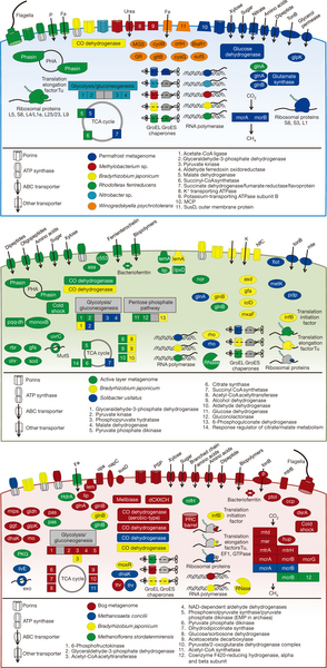 Multi-omics of permafrost, active layer and thermokarst bog soil microbiomes | MycorWeb Plant-Microbe Interactions | Scoop.it