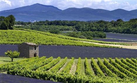 Magazine | Entre vignes et truffes - L'Alsace | Vins de la Vallée du Rhône méridionnaux | Scoop.it