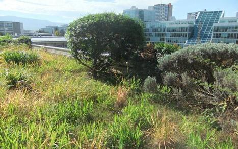 Green Roofs in Geneva : Potential Refuge for plants and bryophytes ? Biotope City | Greenroofs & Urban biodiversity | Scoop.it