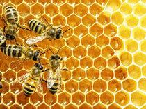 Extinction massive des abeilles : Santé Canada ne bouge pas | EntomoNews | Scoop.it