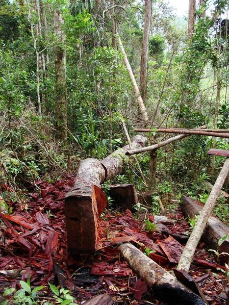 Selective logging takes its toll on mammals, amphibians | Sustain Our Earth | Scoop.it