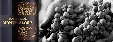Family Wines Le Marche:Vini Centanni, Montefiore dell'Aso   Le Marche   Scoop.it