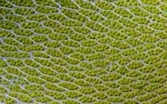 Bionic Leaf Makes Fuel from Sunlight, Water and Air | Synthetic Biology | Scoop.it
