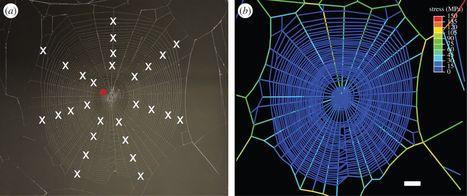 L'araignée accorde sa toile comme les cordes d'une guitare | EntomoNews | Scoop.it