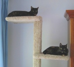 Does your home have a cat superhighway? | The Conscious Cat | Pet News | Scoop.it