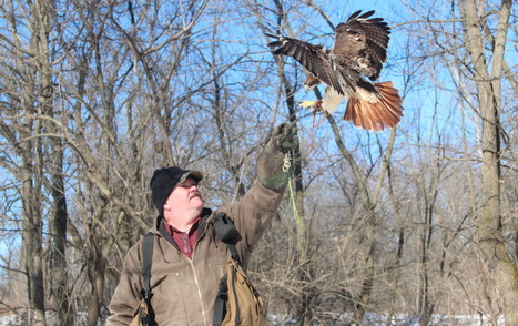 Falconers engage in ancient sport of kings - Milwaukee Journal Sentinel | Mesopotamia | Scoop.it