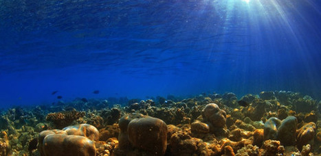 Deep-Sea Microbes Unchanged for 2.3 Billion Years | Geology | Scoop.it