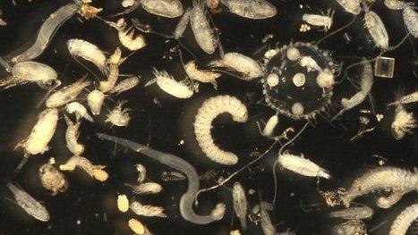 [L. Aérologie] Des chercheurs toulousains ont estimé le niveau de radioactivité du plancton du Pacifique Nord-Ouest, après Fukushima - France 3 Midi-Pyrénées | Revue de presse | Scoop.it