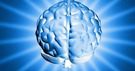 Intelligence collective et cerveau triunique | Mon étude:L'impact de la cohésion de  groupes dans les métier a risques | Scoop.it