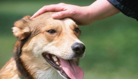 Dogs Love Being Petted Way More Than Verbal Praise, Research Shows | enjoy yourself | Scoop.it