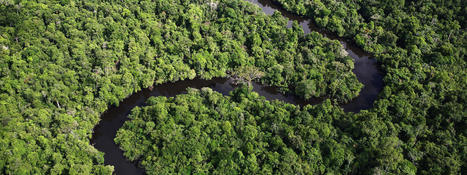 Amazon | Places | WWF | Complexity Science | Scoop.it
