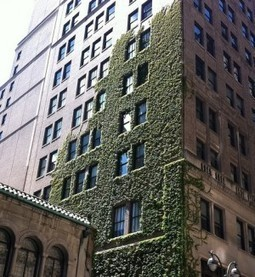 What is a Green Wall? | homedesignsplash.com | Vertical Farm - Food Factory | Scoop.it