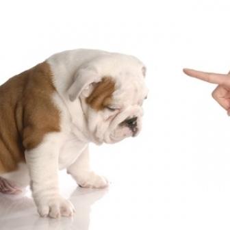 3 Best Ways to Say 'No' | El lenguaje: una interacción humana a través de una pantalla | Scoop.it