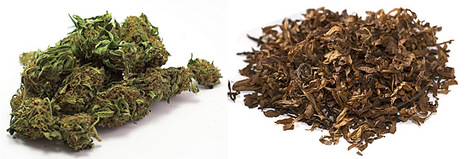 Mixing cannabis with tobacco increases dependence risk, suggests study | Substance Use and Addiction | Scoop.it