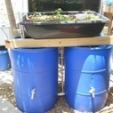 Sahib introduces Aquavermiponics Systems » Sahib Punjabi - Aquaponics - an urban, soil free, food garden in Winter Park, Florida. | Aquaponics Education | Scoop.it