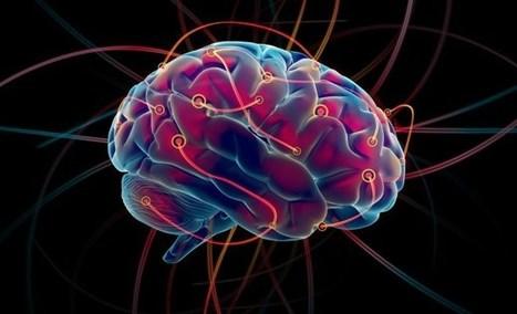 ¿Por qué nuestro cerebro necesita tanta energía? | Biología de Cosas de Ciencias | Scoop.it