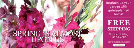 Wholesale Indoor & Outdoor Flower Bulbs Direct For Sale   Annie Haven   Haven Brand   Scoop.it