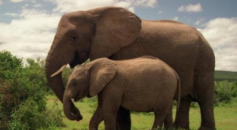 Victory-The New York Addresses the Elephant in the Room | GarryRogers Biosphere News | Scoop.it