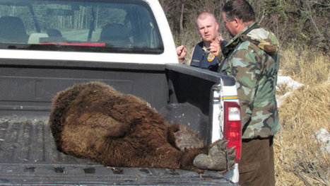 Alaska Man Fights Off Bear, Walks Away with Minor Injuries   Cody's Current issues   Scoop.it