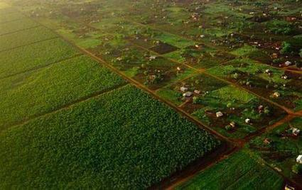 Les cinq pays africains aux terres agricoles les plus attractives, selon Land Matrix | Chronique d'un pays où il ne se passe rien... ou presque ! | Scoop.it