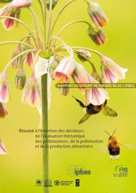 Pollinisation, pollinisateurs et production alimentaire, un état des connaissances pour l'action publique et privée | Insect Archive | Scoop.it