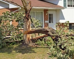 California Tree Accident and Injury Attorney | California Premises Accidents and Injury Attorney Claim Information | Scoop.it