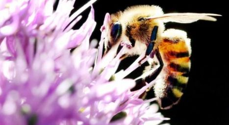 La disparition des abeilles en colloque à Gembloux | EntomoNews | Scoop.it