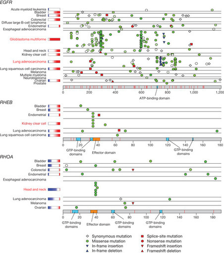 Discovery and saturation analysis of cancer genes across 21 tumour types : Nature : Nature Publishing Group | Systems biology and bioinformatics | Scoop.it
