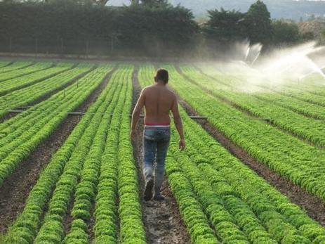 Environnement : une salade sur dix contient des produits interdits | ECONOMIES LOCALES VIVANTES | Scoop.it
