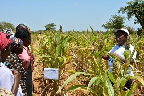 How community-based organisations promote climate-smart practices in Kenyan drylands | Climate Smart Agriculture | Scoop.it