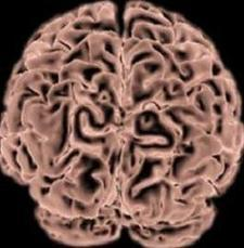 Santé : la cocaïne provoquerait une atrophie du cerveau - Actualités News Environnement | Isanté | Scoop.it